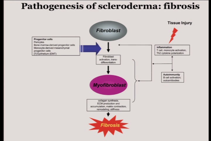 Scleroderma and Fibrosis